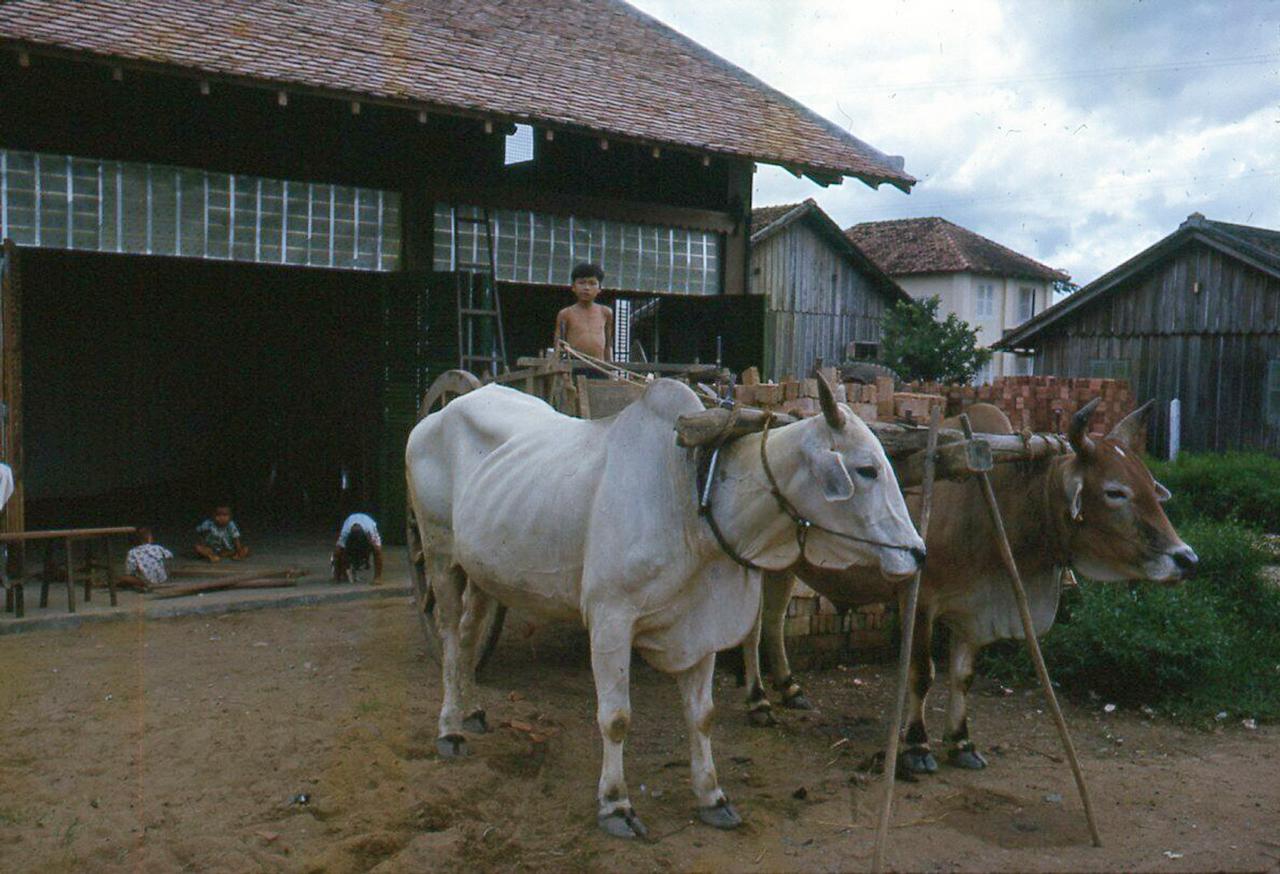 Xe bò năm 1962 ở Cà Mau