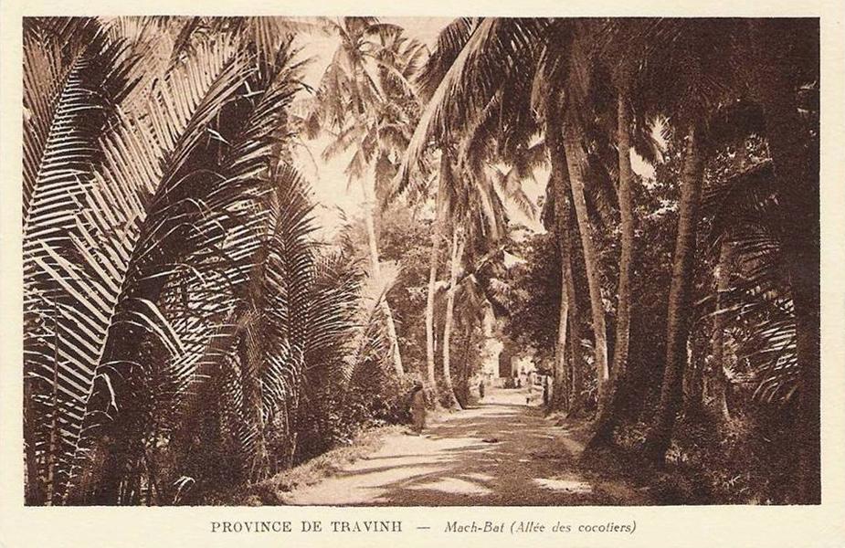 Hàng dừa 2 bên con đường ở Mặc Bắc