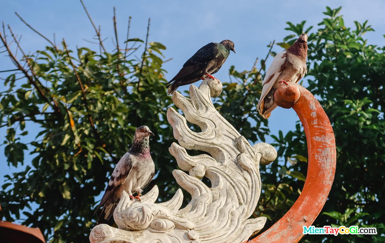 Những chú chim bồ câu đậu trên mái Tây Thiên Nhất Trụ