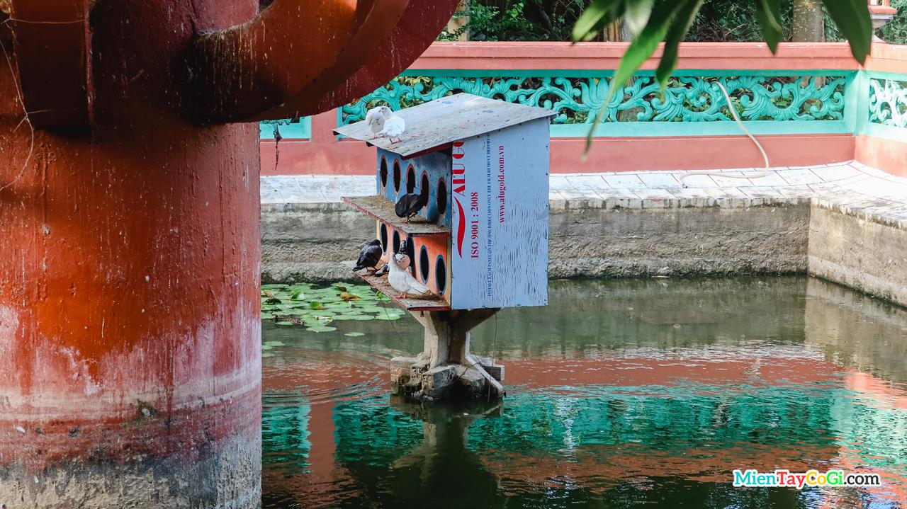 Tổ chim bồ câu bên dưới hồ ở Tây Thiên Nhất Trụ