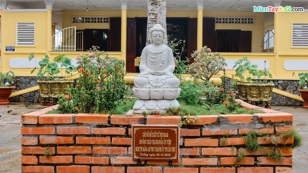 Tượng Phật Đà ngồi dưới gốc cây bồ đề xuất xứ Myanmar trồng năm 2012