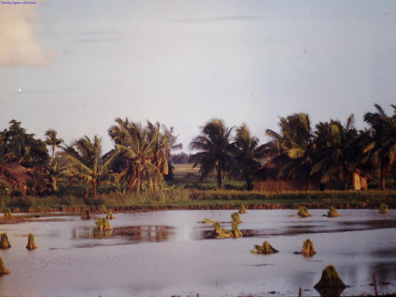 Khung cảnh đậm chất Mekong tháng 9 năm 1967 | Photo by Fletcher Clyde