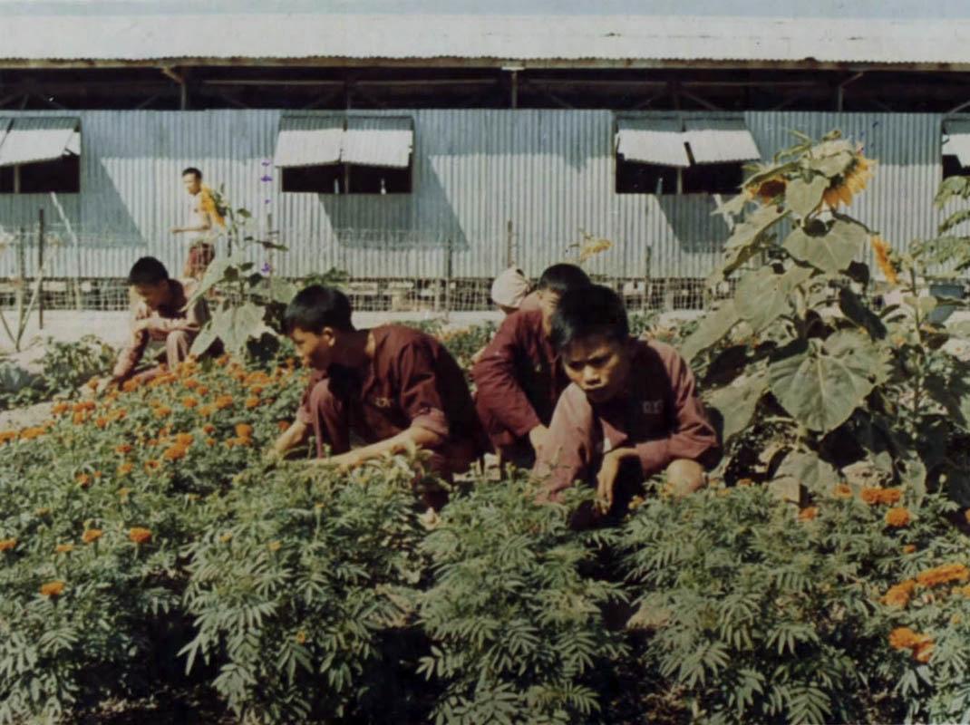 Tù binh lao động trong vườn rau
