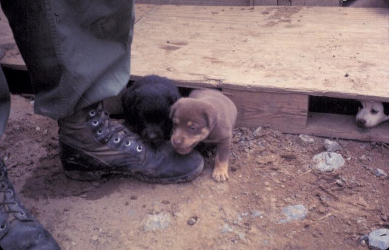 Những chú chó con bên cạnh người lính ở trại Tân An năm 1969 | Photo by Craig Ailles