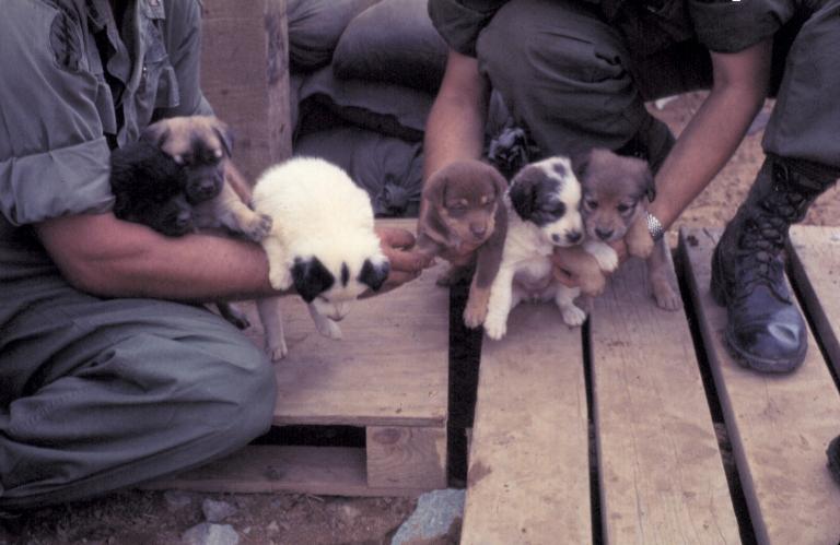 Những chú chó con trong trại Tân An