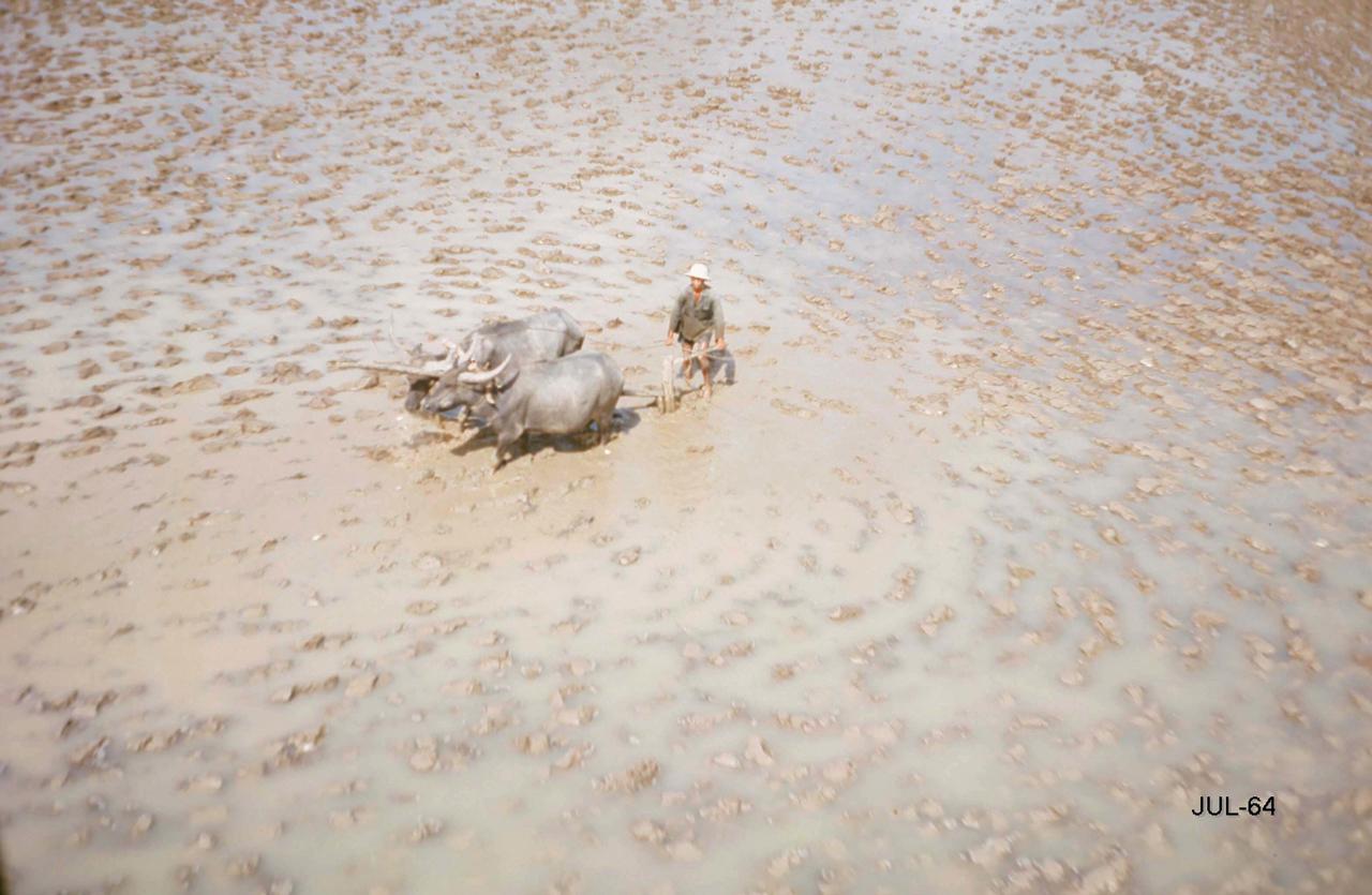 Cày ruộng tháng 7 năm 1964 | Photo by George Muccianti
