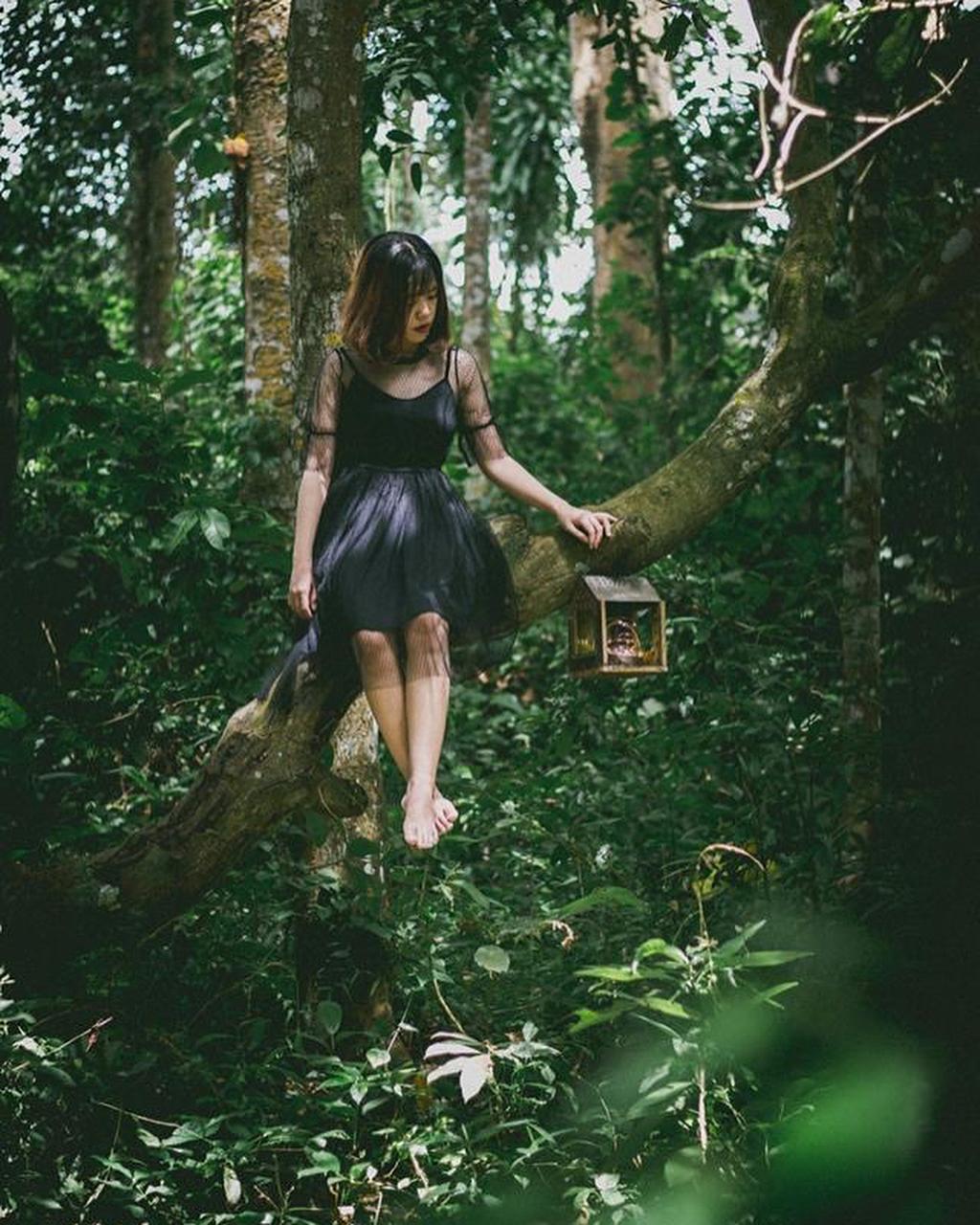 Bộ ảnh du khách chụp tại rừng cây