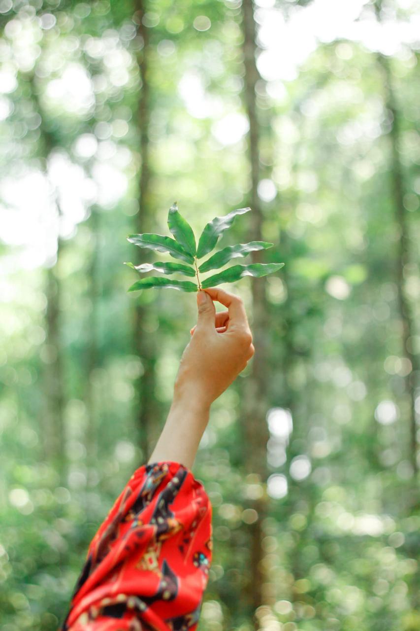 Concept chụp hình cùng lá cây ở rừng sao Tri Tôn