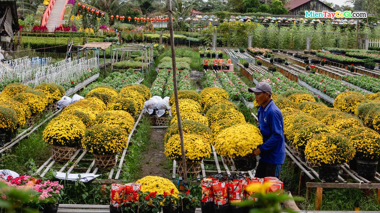 Di chuyển chậu cúc cho khách hàng mua hoa