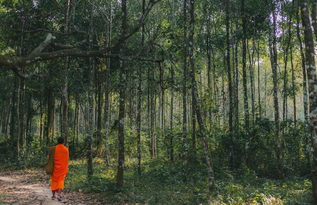 Khu rừng cây sao với phong cảnh background tuyệt đẹp