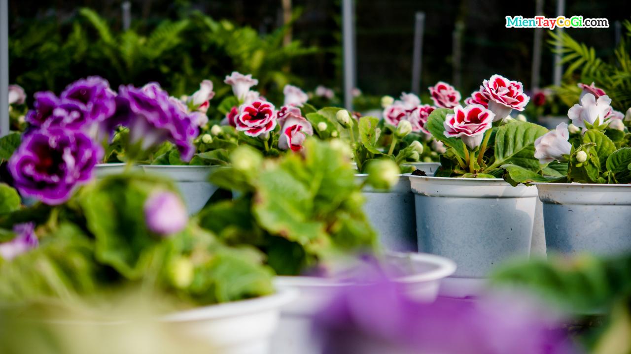 Những bông hoa tình yêu rực rỡ sắc màu