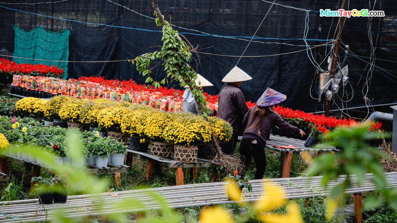 Những mẫu hoa mới ở Làng hoa Sa Đéc 2021