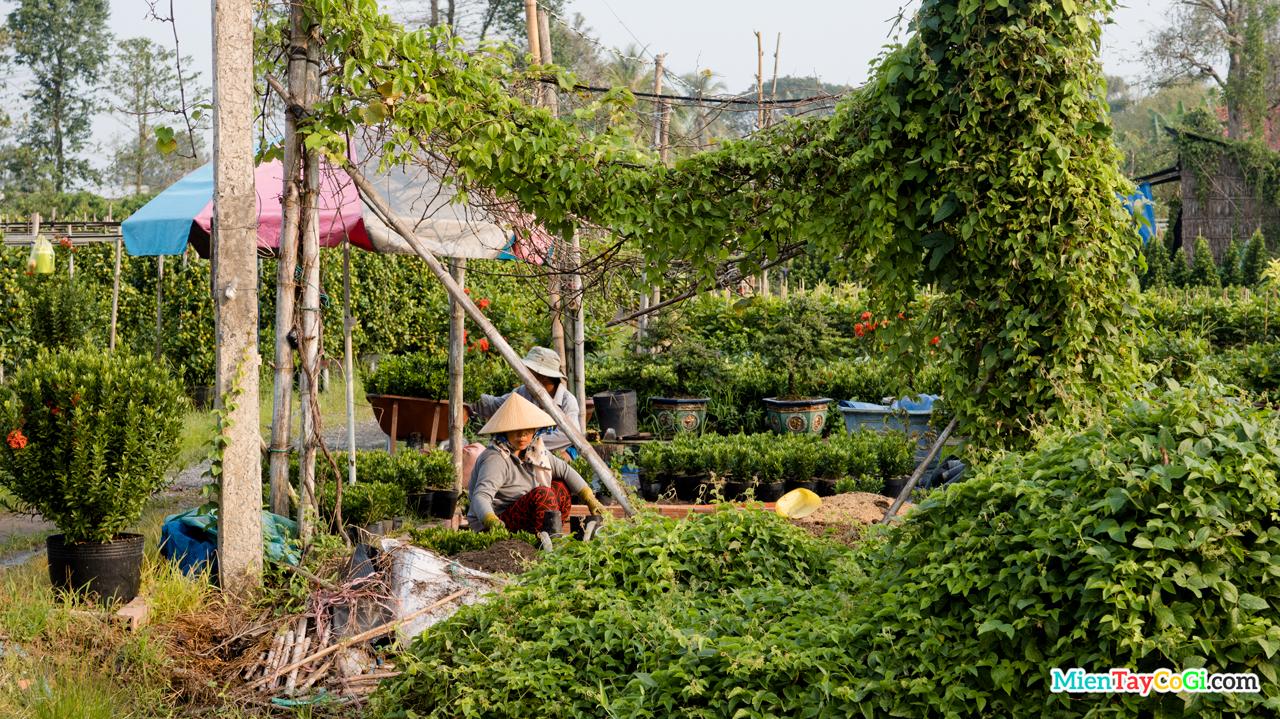 Sắc màu bình yên xanh thẳm ở vườn hoa của môt hộ gia đình tại Làng hoa Sa Đéc