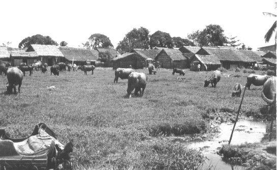 Cánh đồng cỏ nơi chăn trâu gần 1 khu dân cư nghèo ở Cần Thơ năm 1965