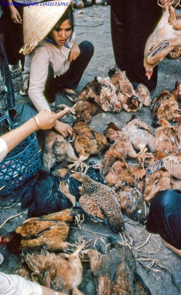 Bán gà Chicken Dinners chợ Mỹ Tho năm 1969   Photo by Lance Cromwell