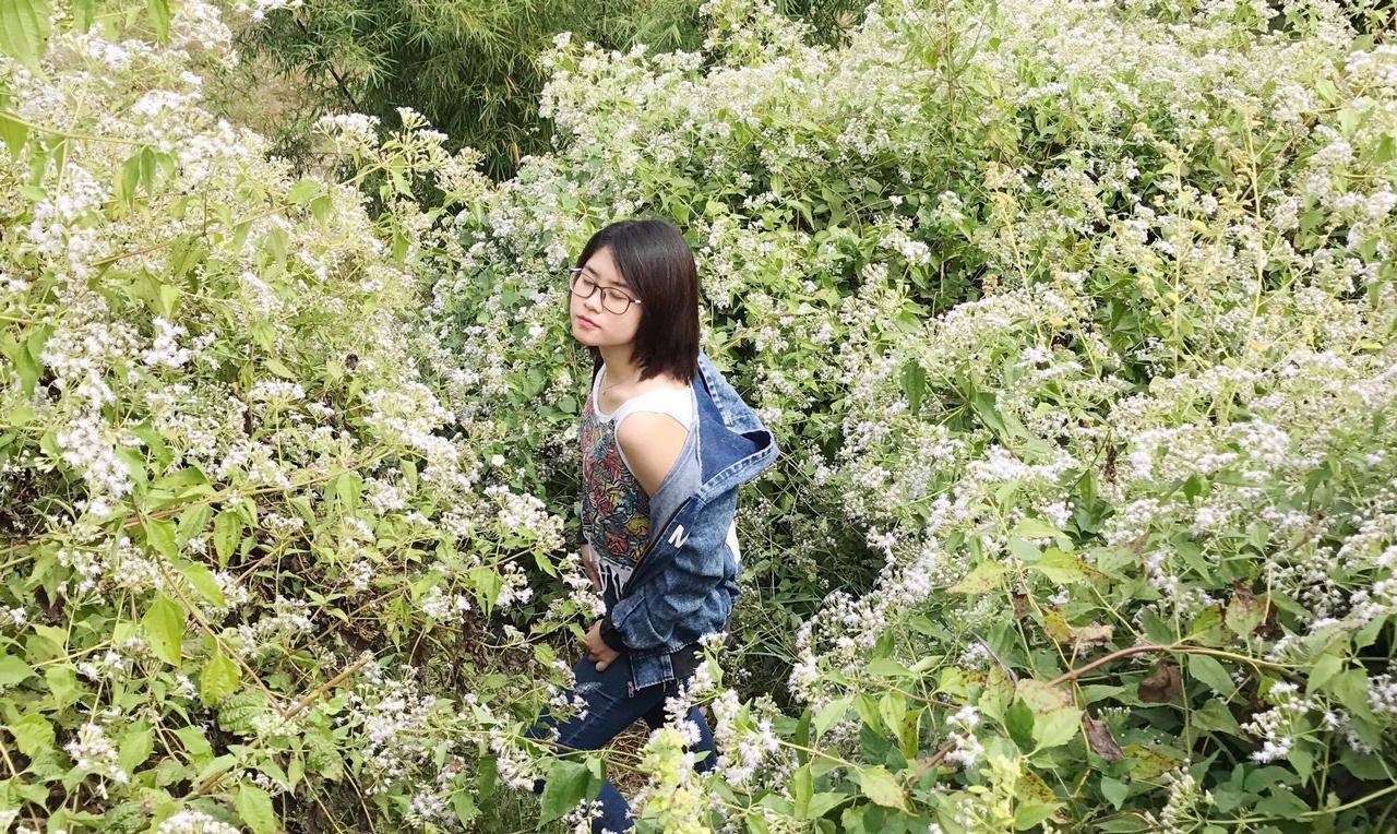 Bụi hoa ở hồ được nhiều bạn trẻ chụp ảnh