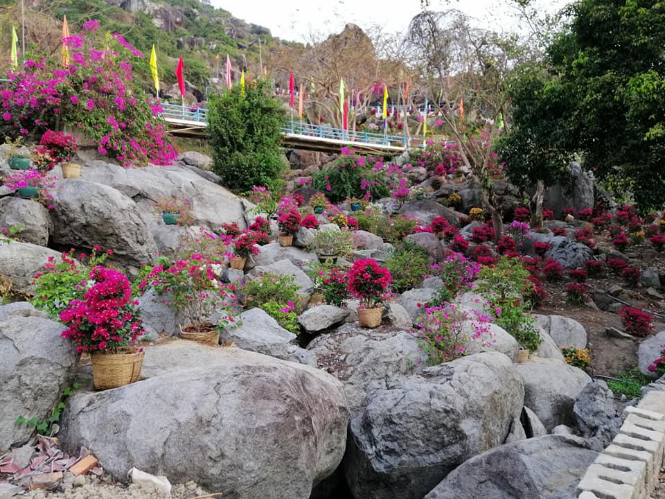 Con đường hoa nở đầy trên khu vực đồi