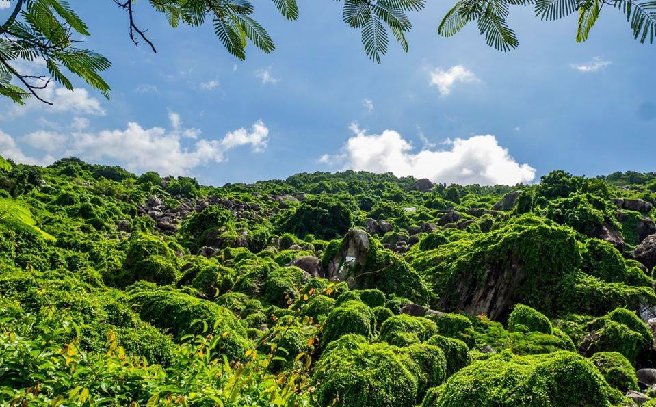 Đồi Tức Dụp bao phủ xanh | Photo by Dika