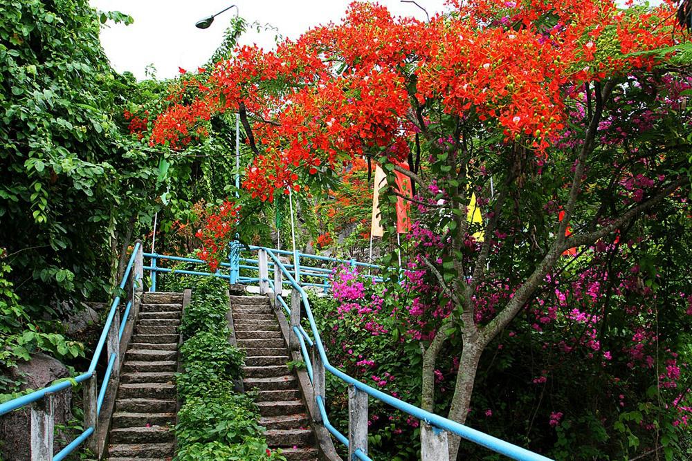 Đường lên đồi với hoa phượng đỏ nở rực rỡ