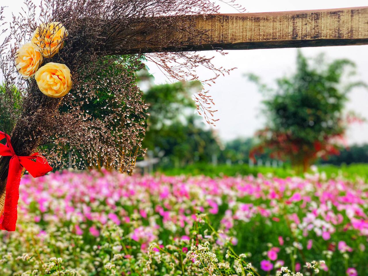 Khung cảnh ở vườn hoa Tam Giác Mạch