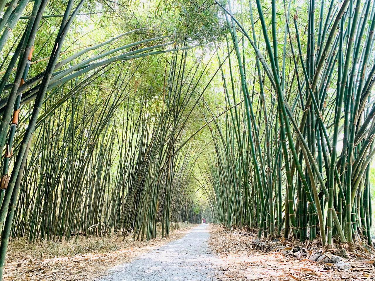 Rừng tre ở khu sinh thái Bamboo Garden