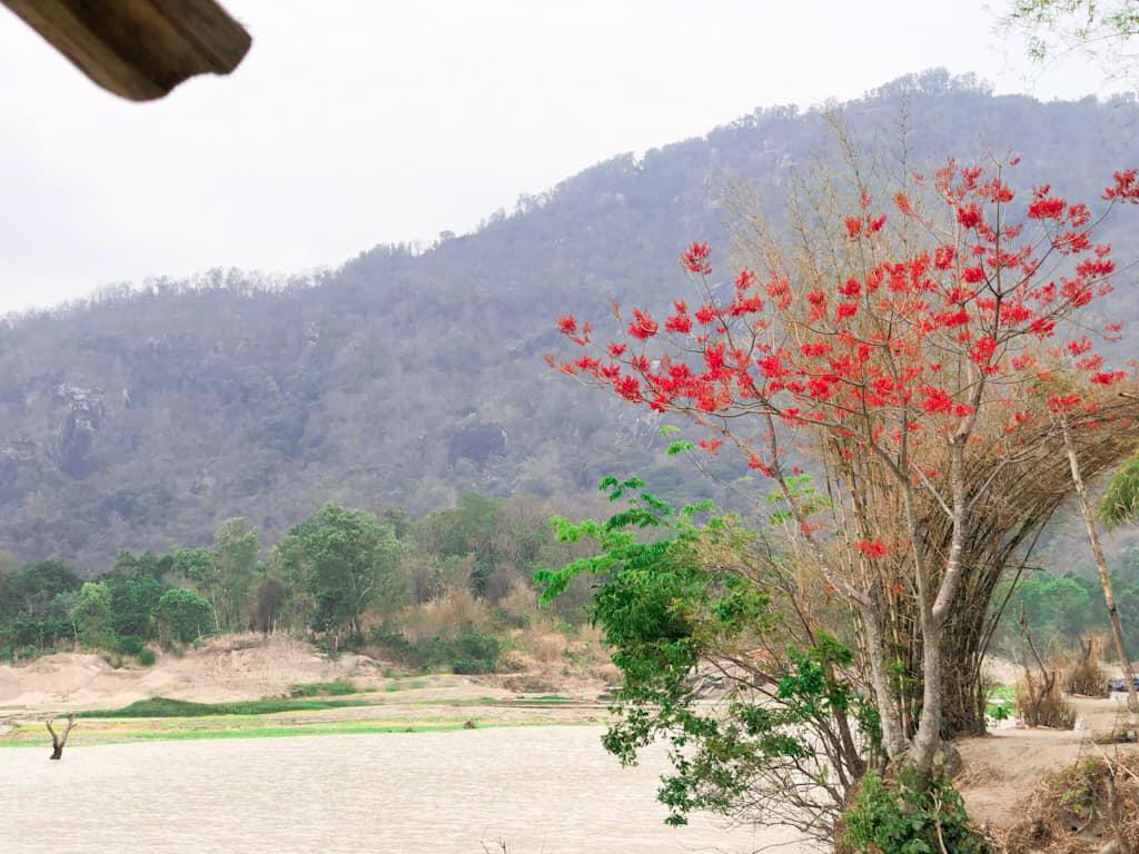 Mùa hoa nở bên hồ Ô Thum Tri Tôn