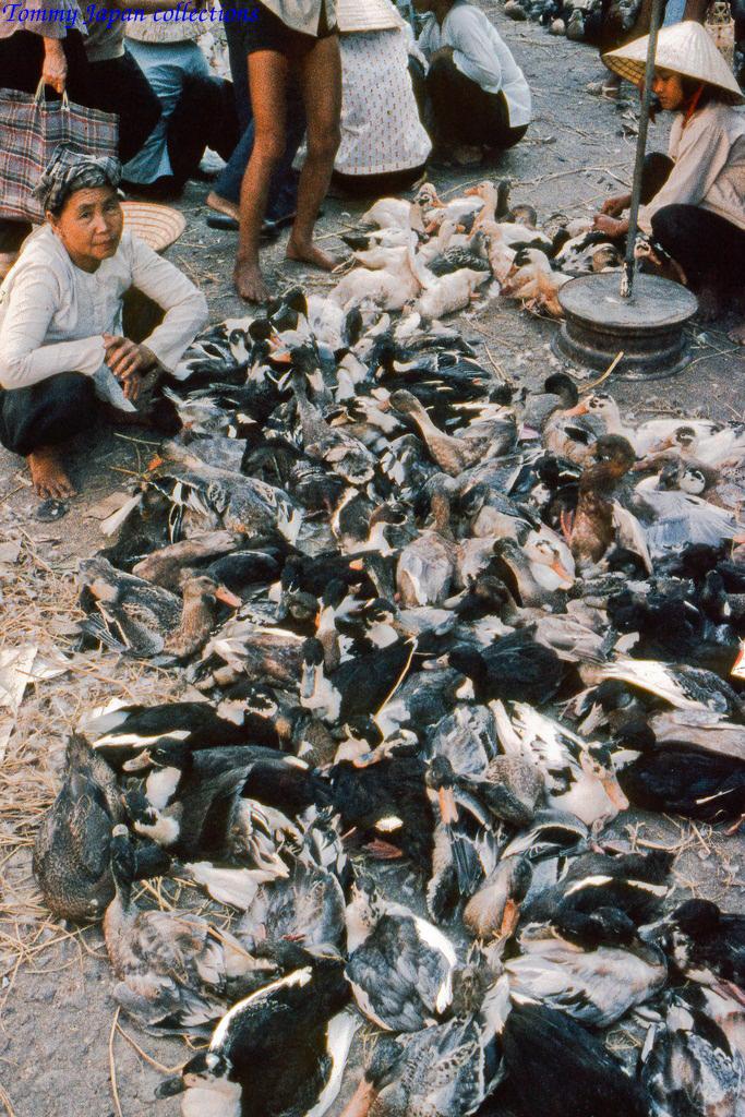 Vựa vịt chợ Mỹ Tho năm 1969   Photo by Lance Cromwell