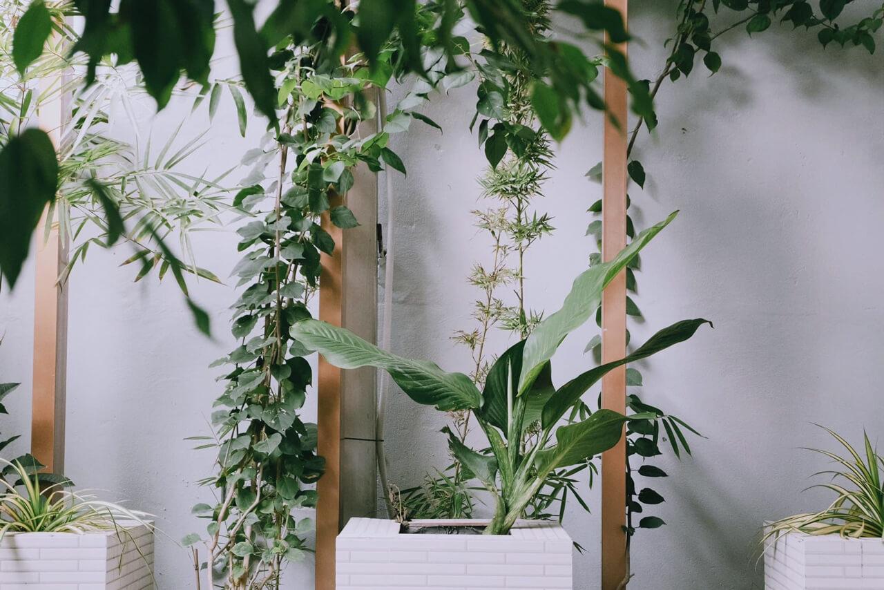 Cây xanh ở sân vườn quán cà phê Dream Cần Thơ