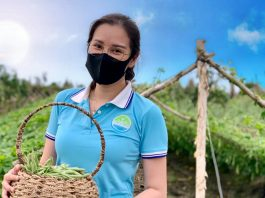 Mô hình cho thuê đất trồng rau ở Cần Thơ Eco Farm